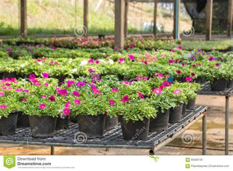 planting pots for sale 100 planting pots for sale flower pot images u0026