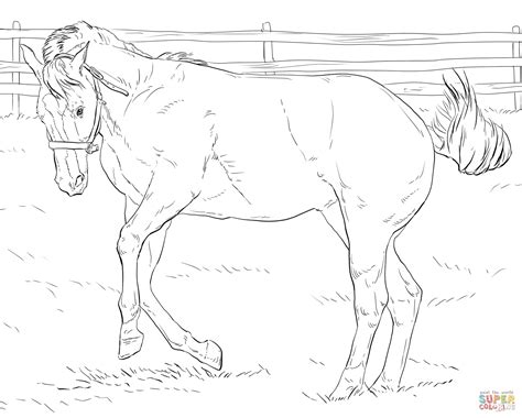 coloring pages of bucking horses bucking horse coloring coloring pages