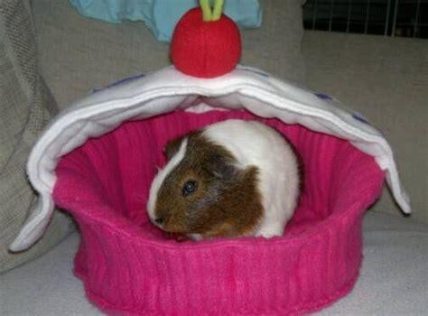guinea pig bed guinea pig bed guinea pigs pinterest guinea pigs