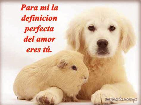 imagenes de amor con animales animados im 225 genes de perros bonitos con frases