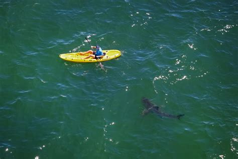 bay boats to avoid to avoid dangerous shark encounters information trumps