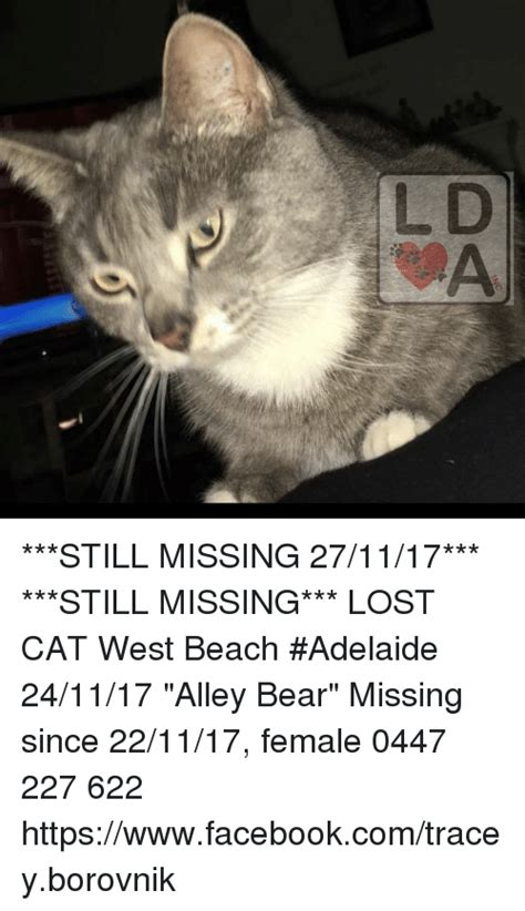 Missing Cat Meme - missing cat meme 28 images meme lost cat welcome to