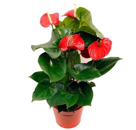 www piante da appartamento piante da appartamento quali scegliere e come prendersene
