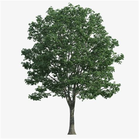 trees png image for free download