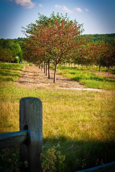 Cherry Orchards In Door County Wi by 31 Best Images About Orchards On Cherry