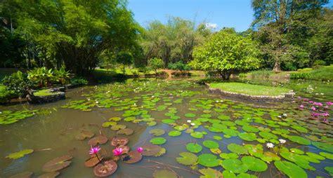 botanical garden peradeniya royal botanical gardens in peradeniya half day sri