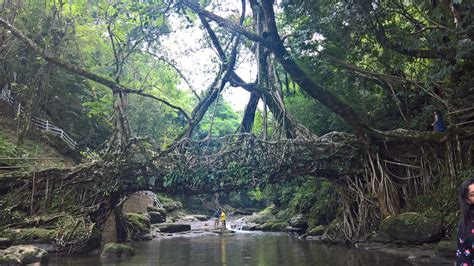day trip  living roots bridge mawlynnong village