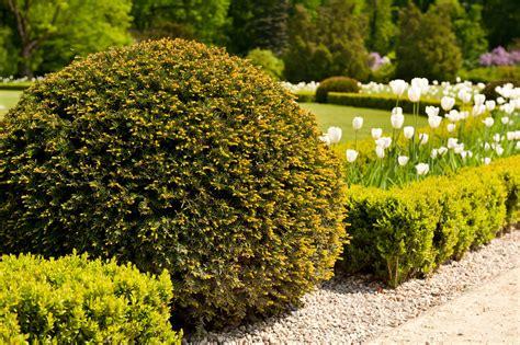 shrubs patriot gardens