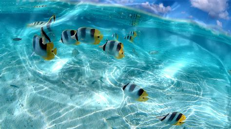 wallpaper 3d live for windows 7 33 best live wallpapers free to download