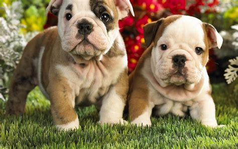 imagenes animales perros imagenes de perros hermosos fondos de pantalla