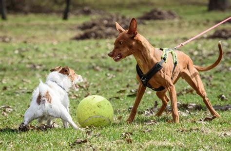 aggression towards aggression towards other dogs