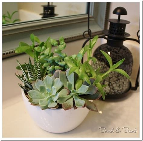 succulents in bathroom 1000 images about bathrooms on pinterest bead board