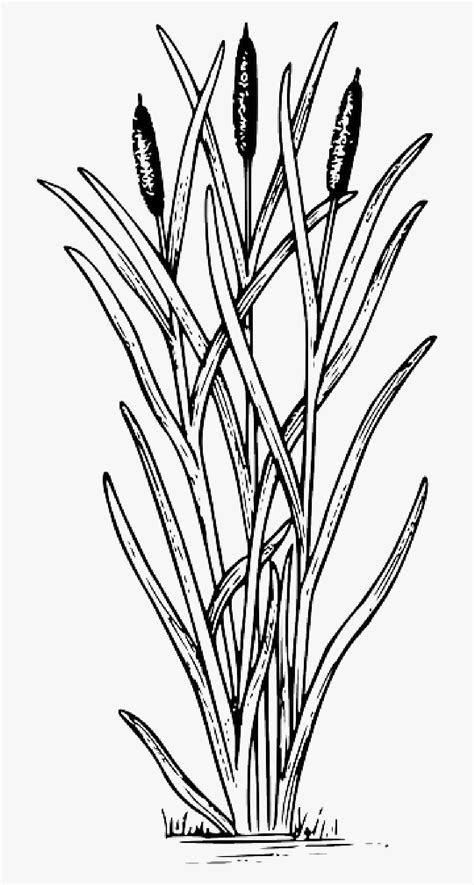 cattails clipart black and white 10 free Cliparts