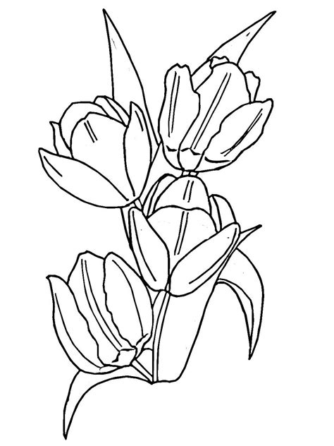 coloring page tulip flower tulip writing pages coloring pages
