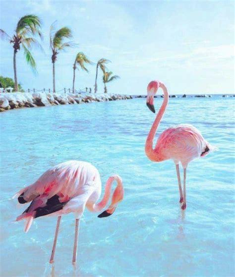 flamingos birds wallpaper 65 best pink flamingos images on pinterest flamingos