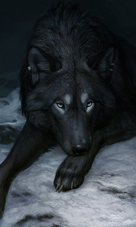 wolf with best 25 black wolves ideas on wolf black