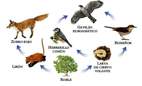 cadenas alimentarias y sus elementos cadenas alimenticias blog de ecologia quot 6d quot
