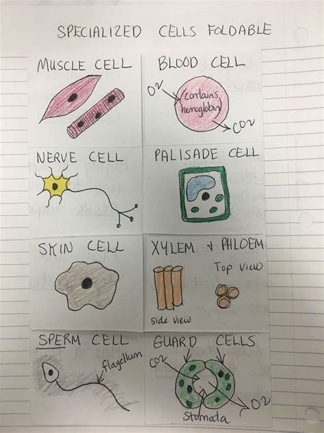 what is a stem cell definition uses research facts video