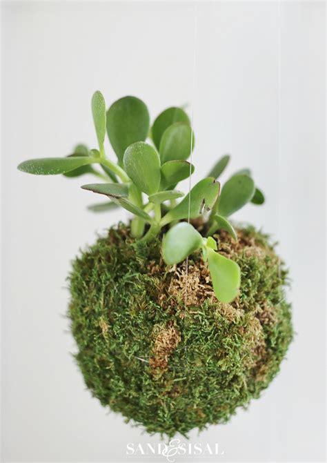 japanese house plants diy kokedama japanese moss ball planters sand and sisal