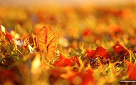 tumblr themes free autumn wallpapers fall leaves wallpaper cave