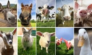 Imagenes Animales Dela Granja | 10 selfies de animales de granja hogarmania