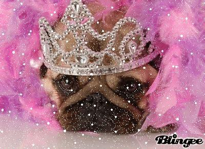 princess pug pug princess picture 129332911 blingee