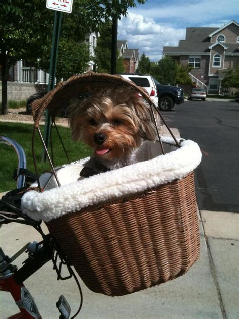 bicycle baskets for dogs tagalong wicker bicycle basket for dogs baxterboo