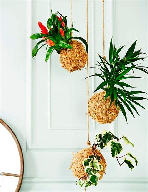 best indoor hanging plants our top 10 indoor hanging plants that are hard to kill