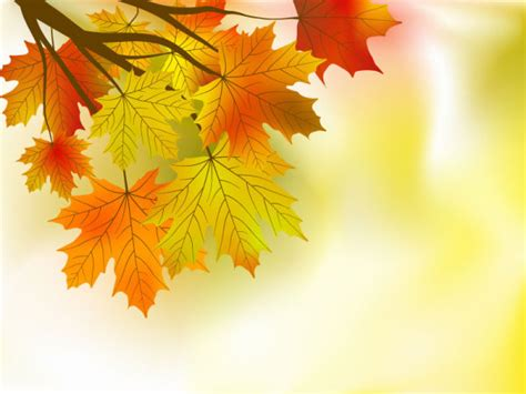 indah maple daun latar belakang 01 vektor free