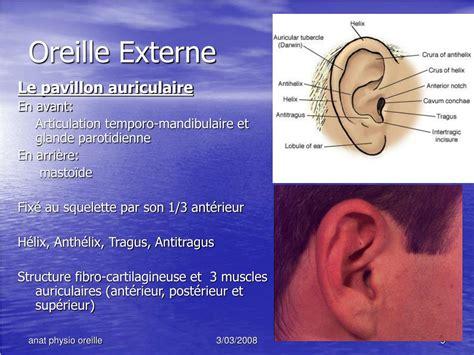 ppt anatomie et physiologie de l oreille powerpoint