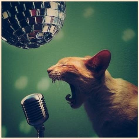 cat singing what is the best song about cats a question for the ages