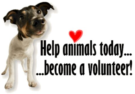 service dogs volunteer volunteer ramona humane society