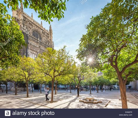 patio orange tree seville cathedral patio courtyard with orange trees with