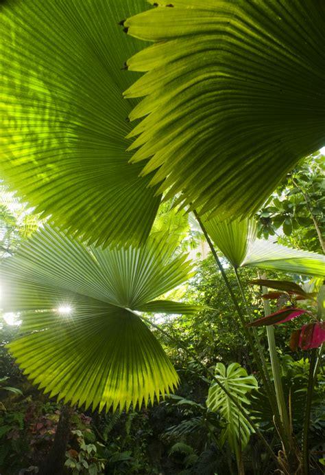 palms   butterfly rainforest florida museum