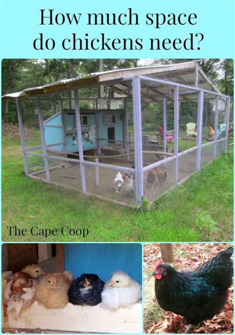 how much room does a chicken need in a coop how much space do chickens need need to backyards and a small