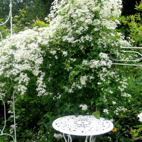 1000 images about moon garden on pinterest white flowers moon gate and plants