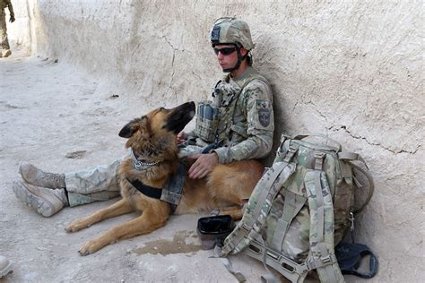wars dogs animals used in war tony hakim animals