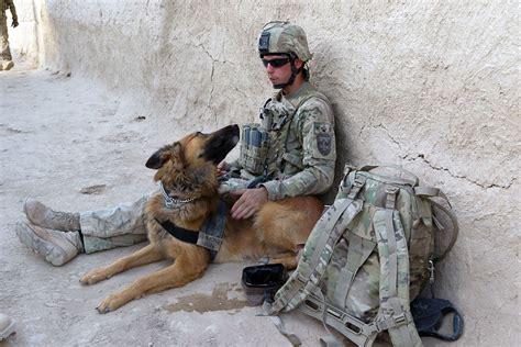 combat dogs animals used in war tony hakim animals