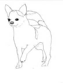 chihuahua coloring pages chihuahua coloring pages