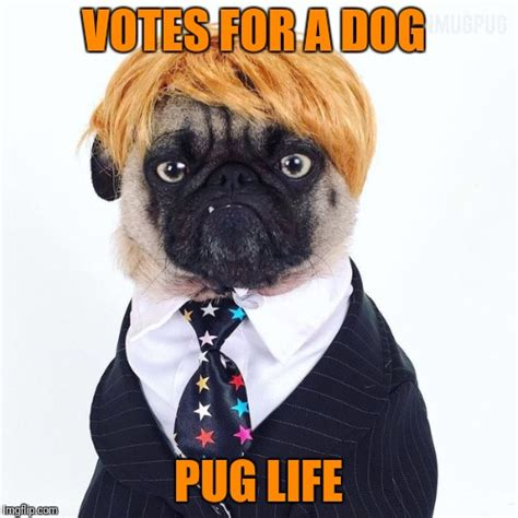 lifespan for pugs pugs imgflip