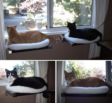 window cat bed 10 cool hanging cat perch ideas tail and fur