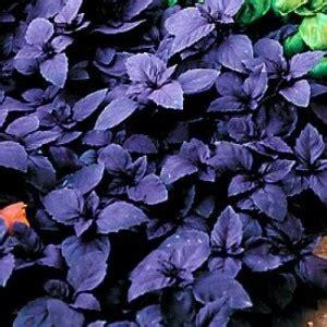 Benih Biji Bibit Bunga Phlox Import Uk Kemasan Repack 1 bibit bunga basil leaf