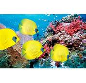 Underwater World Of Tropical Fish And Corals Wallpaper