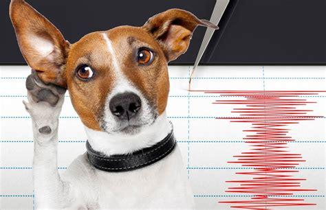 can dogs sense can a sense a disaster corner