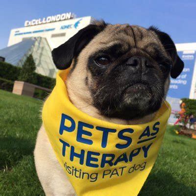 pug therapy doug pug therapy dougpugtherapy