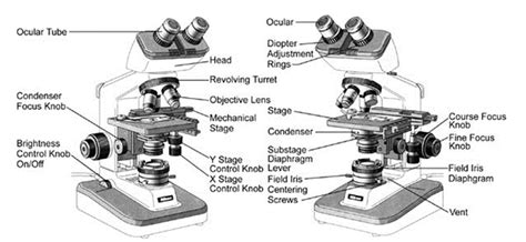 What Is The Knob On A Called by Compound Microscope Labeled Rheostat Www Pixshark