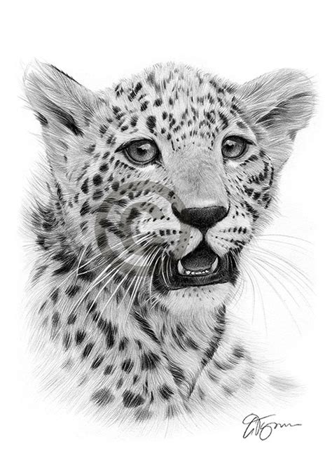 Pet portraits, pencil drawings and signed artwork prints