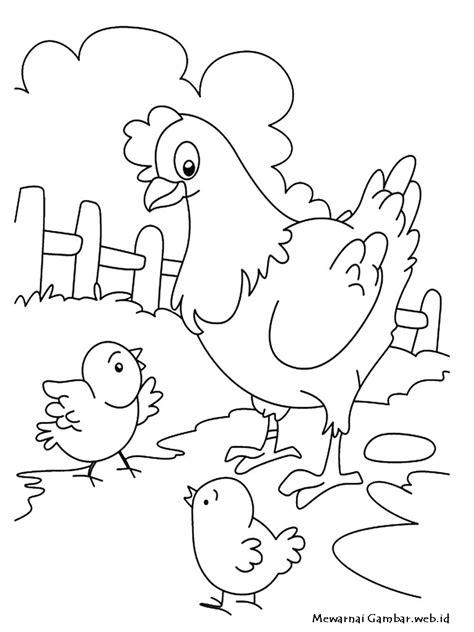 Mewarnai Gambar Ayam | Mewarnai Gambar