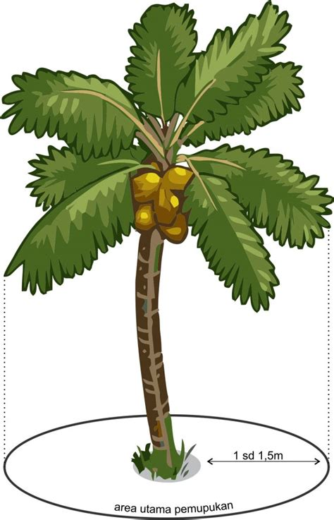 cara merawat tanaman kelapa agar meningkatkan hasil agrokompleks kita
