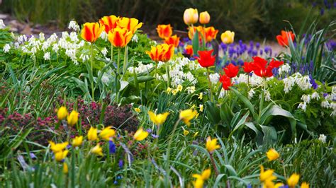 Flower Garden Photos Free Flower Garden Free Stock Photo Domain Pictures